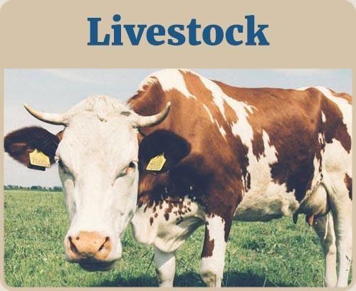 Livestock Banner Livestock Livestock Branding Custom Branding Iron