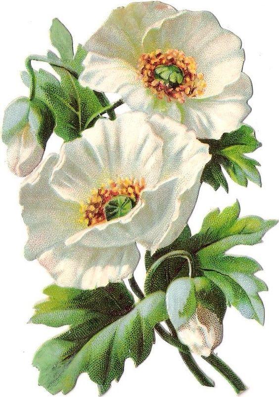 Oblaten Glanzbild scrap die cut chromo Blume flower fleur Blüte blossom: