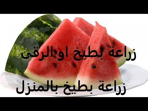 بطيخ او رقى طريقة زراعتة من البذرة لثمرة Watermelon حلقة 176 Youtube Watermelon Fruit Food