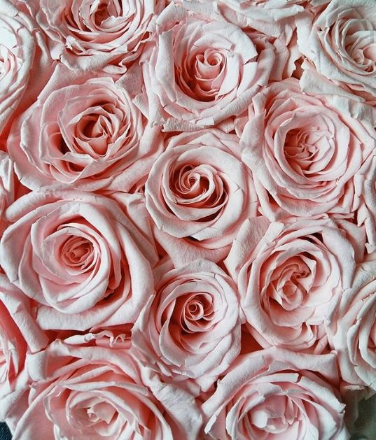 Pink Flowers Nature Roses Wallpaper Pink Flowers Wallpaper Pink Aesthetic Flower Wallpaper Download and use 7,000+ roses stock photos for free. pink flowers wallpaper pink aesthetic