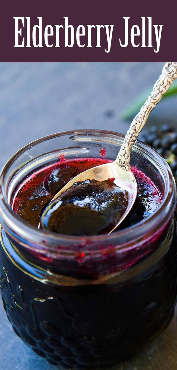 to make naturally anti-viral elderberry jelly from wild elderberries ...