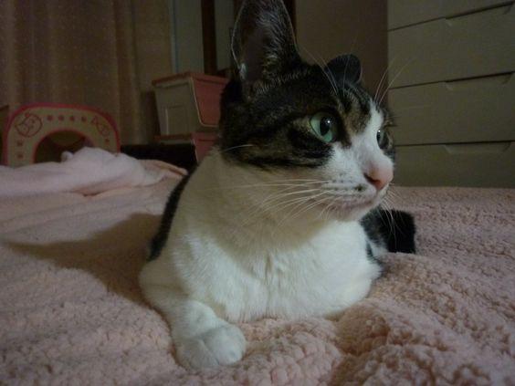 おはにゃんっ(ΦωΦ) 新しい毛布あったかいんだよ ()遠赤綿入りなんだってー http://bit.ly/1I92BAZ by @ke222910
