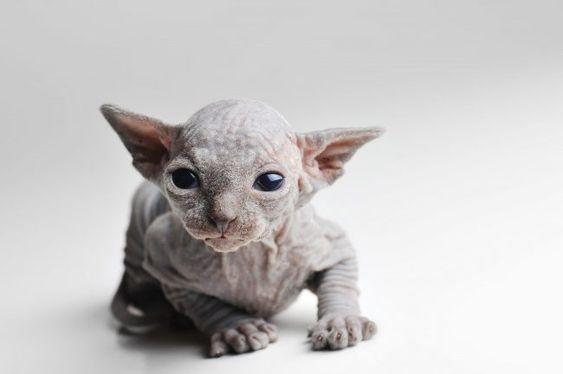 15 φοβερές φωτογραφίες για το τι τύπος γάτα είσαι;