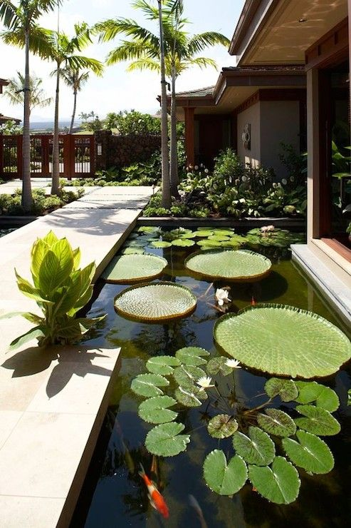 Zen garden with Koi pond up against the front of the home