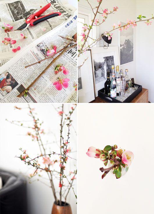 flowering-quince