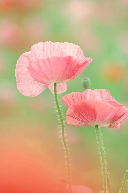 couleur, mouvement et fragilité..le poème d'une vie