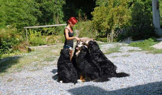 #me #bovarodelbetnese #dogtrainerlife