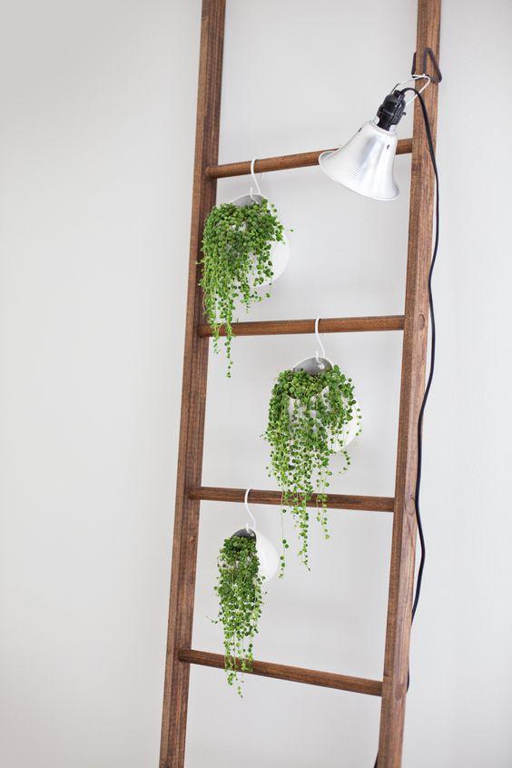 Ces plantes tombantes ont fière allure accrochées à cette échelle décorative.