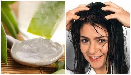 Ủ tóc bằng nha đam có tác dụng gì đang là câu hỏi khiến nhiều chị em băn khoăn.