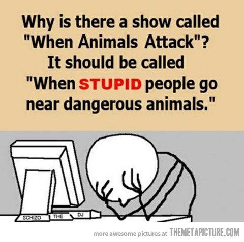 When animals attack…