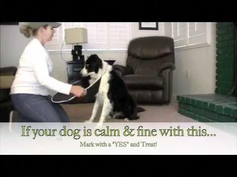 Tips Hacks And Guide For Dog Training For Agility This Will Show