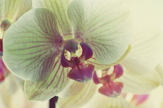 love love these: Loves Inspirations, Deviantart, Life2905, Orchids, Flowers