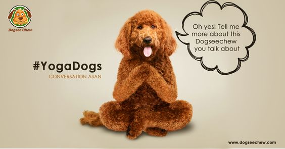 Dogs can't get any cuter when they plead for their favorite treat. #Doga #DogYoga