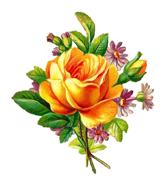 Antique Images: Stock Yellow Rose Digital Download with Purple Daisies: