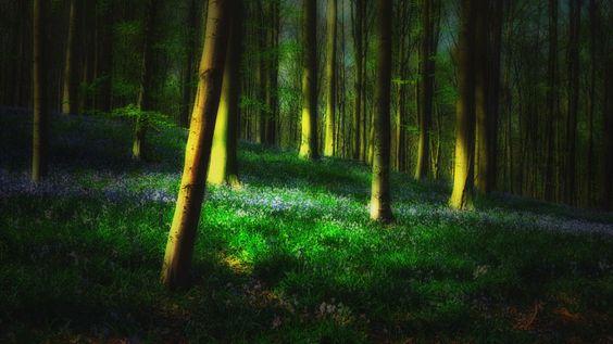 Magic Hallerforest by Saskia Dingemans (Belgium)