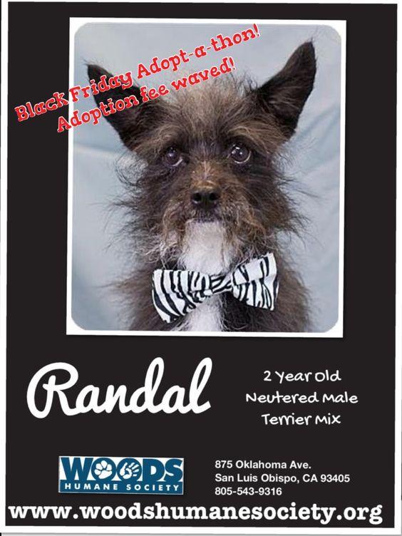 Randal Black Friday Adopt-a-thon! Adoption fee waved!