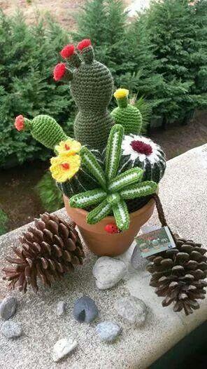Cactus: