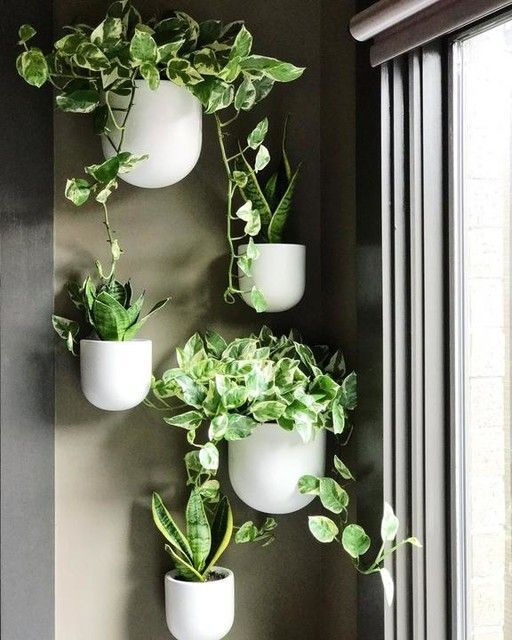 Ceramic Wallscape Hanging Planters Wall Planters Indoor Hanging