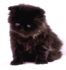 I had a dream that my man got me one of these last night, but in reality he'd prolly be too scared to even pet it.