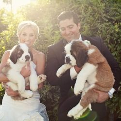 A glamorous pink and gold wedding with a couple of steal-worthy pooches beautifully captured by Ashley Rose Photography!