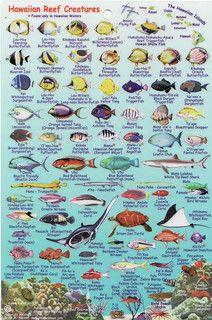 Hawaiian Reef Creatures Fish Chart Tropical Fish Fish
