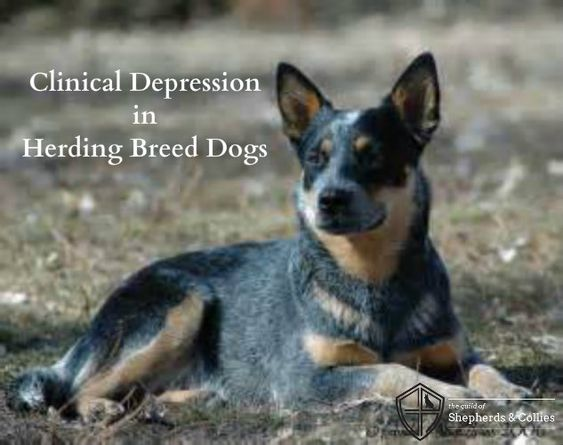 how to tell if your dog has depression