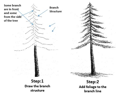 branches tutorial drawing google search outdoor landscape trees plants drawing pinterest plant drawing