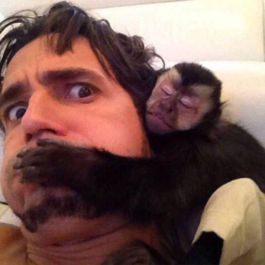 PEDRO HITOMI OSERA: Macaco, cobra e até cabra! Veja quem são as celebr...: