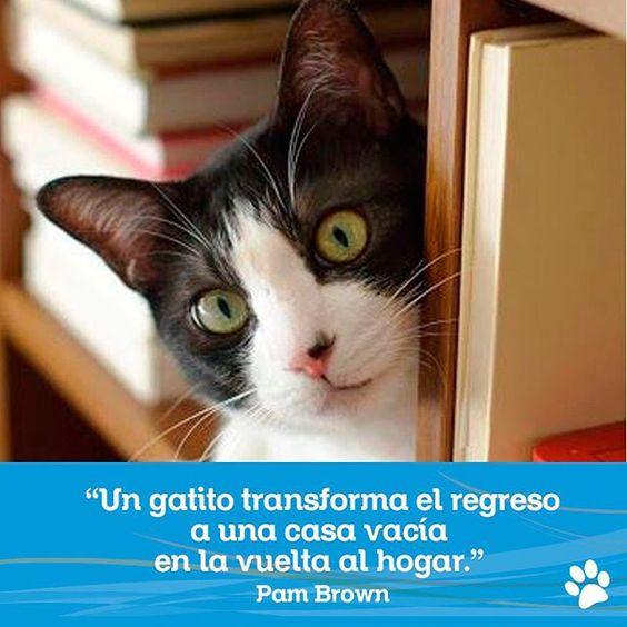 """#FraseDelDiaCVP """"Un gatito transforma el regreso a una casa vacía en la vuelta al hogar."""" – Pam Brown"""
