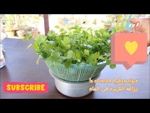 Youtube Planter Pots Planters Plants