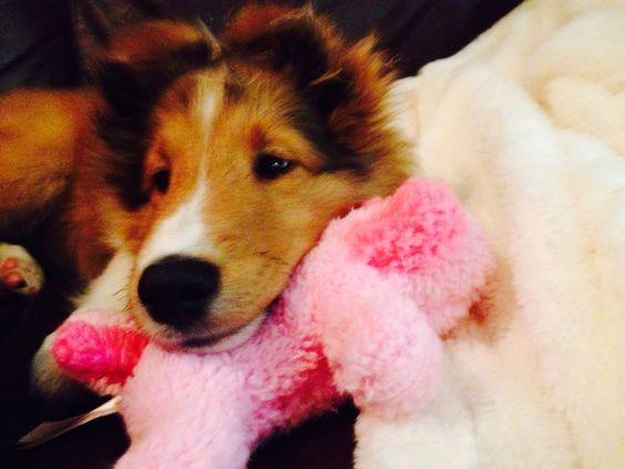 Macy loves her toys!