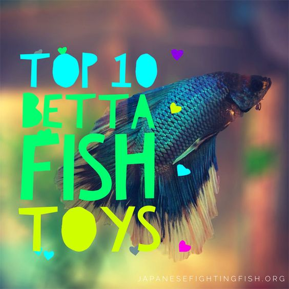 Did you know you could get toys for your betta fish find for Betta fish toys