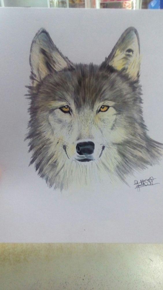 Lobo Feito a lapis