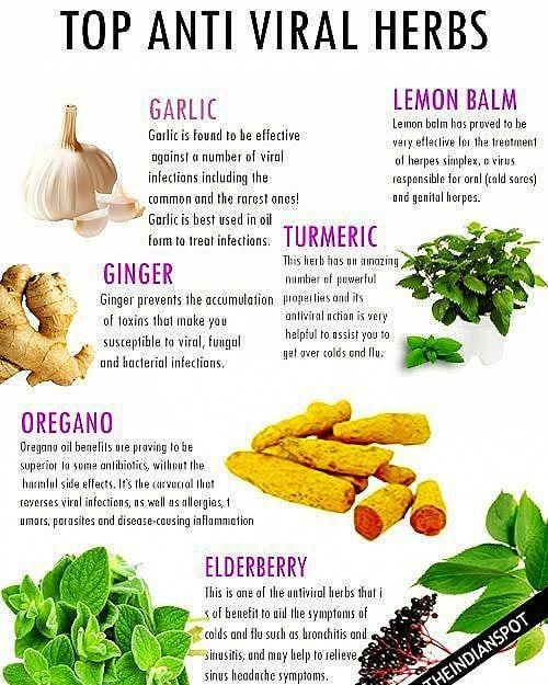 Pin On Herbs For Health Home Remedies