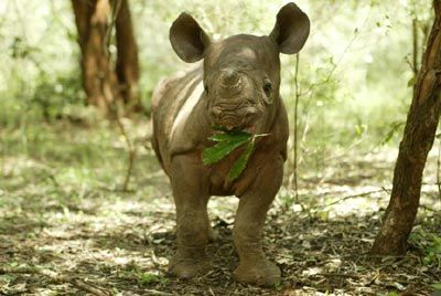 Baby Rhino ... Spring is here and lots of cute baby animals!
