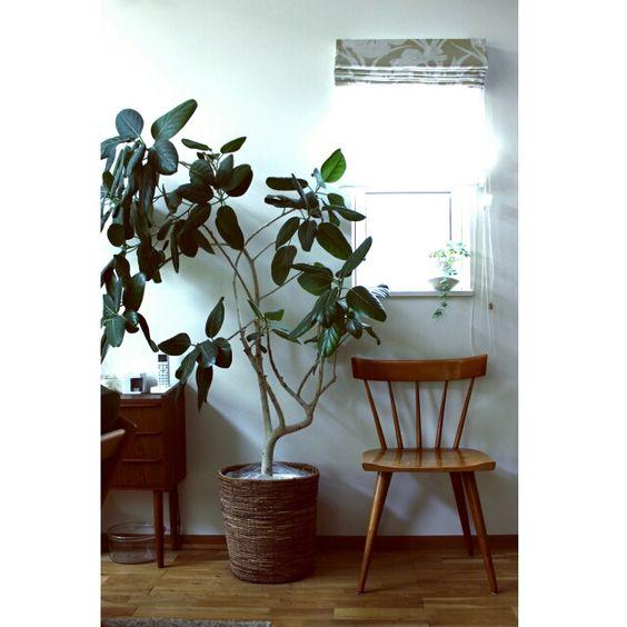 Hisashiさんの、ミッドセンチュリー,グリーンのある暮らし,ポールマッコブ,デザイナーズ,リビング,のお部屋写真