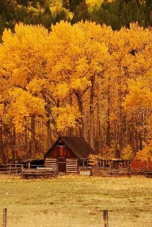 Log Cabin in the Fall:
