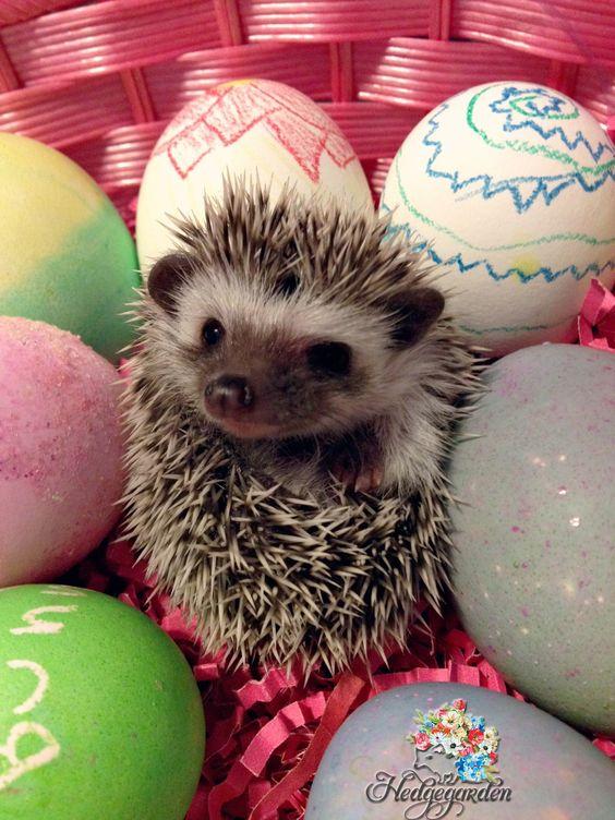 Happy Easter!!! #hedgehog #easter