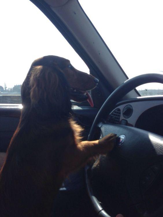 Toni on his way to Suusje his girlfriend