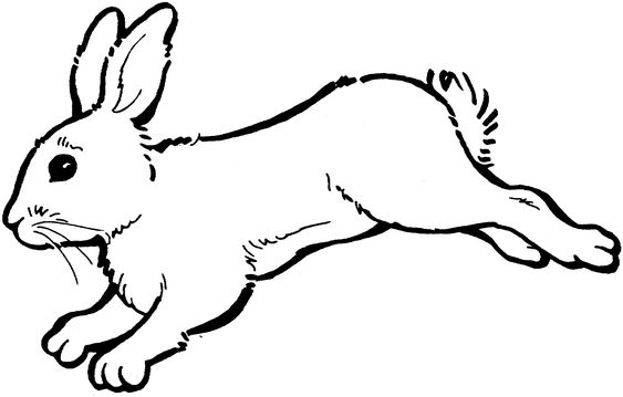 17 Best images about Realistic Rabbit Free clipart