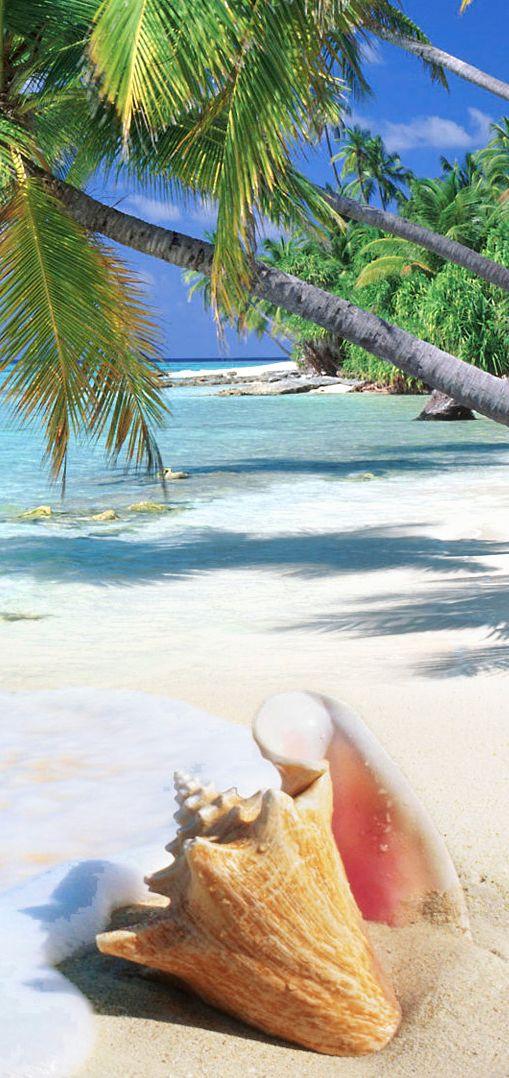 貝殻とグアムのビーチ