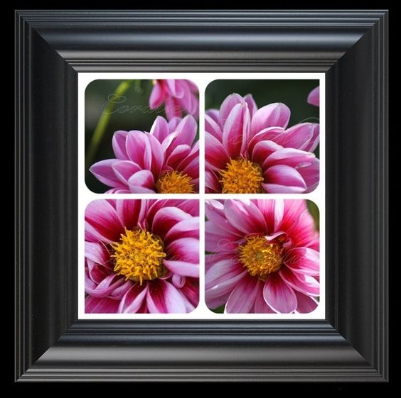 8 x 8 Beauty of the Dahlia Flower Collage Mrsroadrunner.com Floral Photography