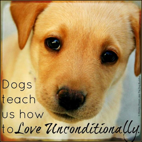 Unconditional love