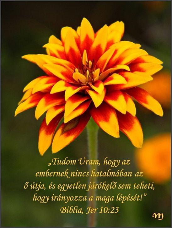 bátorító idézetek a bibliából Pin by Harsányi Andrásné on Bátorító idézetek a Bibliából | Plants