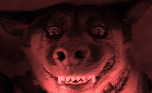 #pets #dogs #humor #teeth
