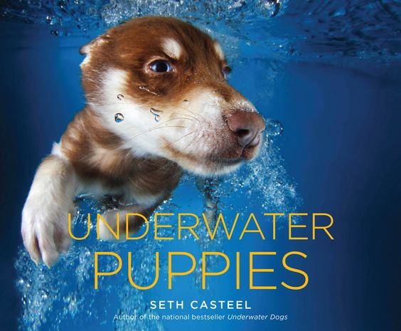"Photographer Seth Casteel dives in with these cuties in his new book, 'Underwater Puppies.' It is a follow-up to his previous magnum opus, ""Underwater Dogs."""