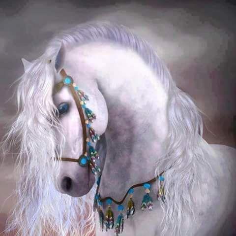 صوره حصان عربي ابيض جميل Horse Wallpaper Horses Fantasy Horses