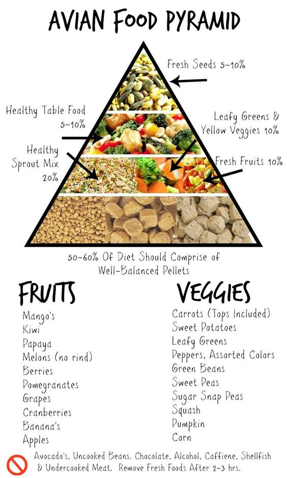 Feed Your Parrot Right. See this infographic on general proportions of food to feed your tropical parrot or pet bird. You might be surprised.