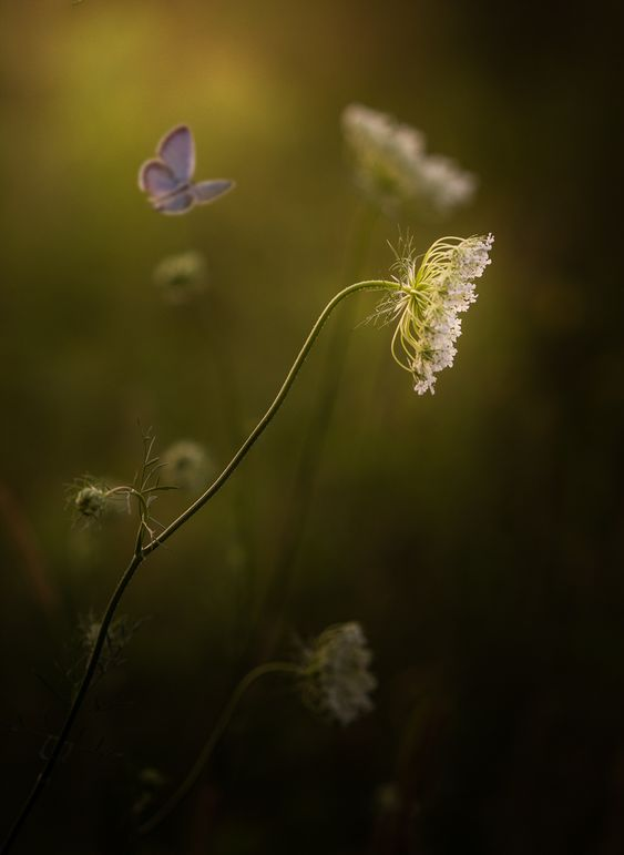 Freedom And Peace Photo in Album Floral Portraits - Photographer: Paul Barson