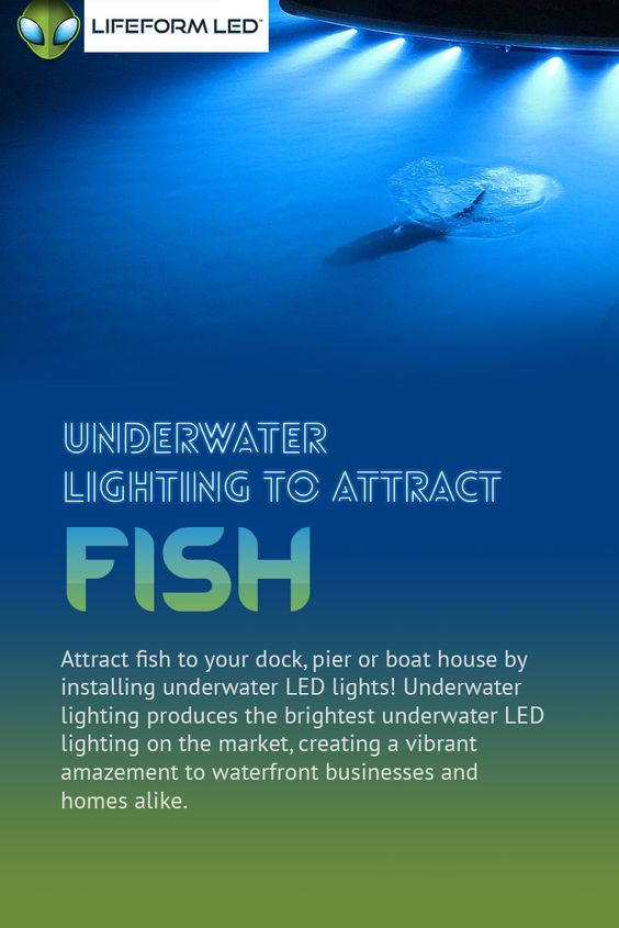 underwater led lighting to attract fish - attract fish to your, Reel Combo